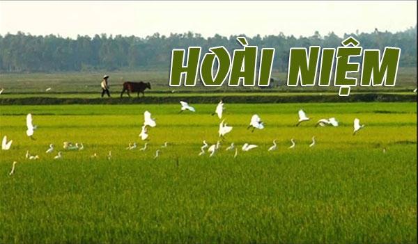 hoai-niem-ve-canh-dong-trang-vinh-hoang